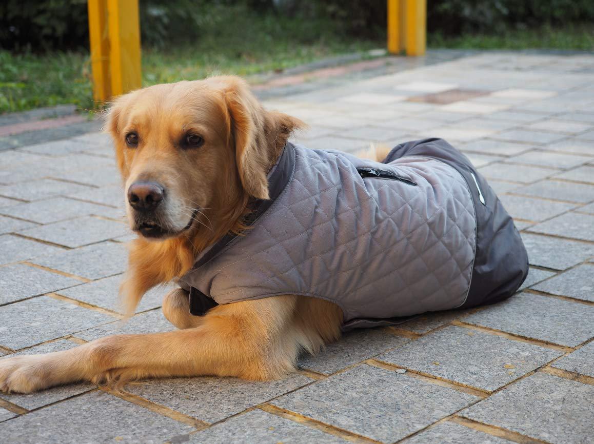 Idepet Chaqueta impermeable para perros Chaqueta cálida de ...