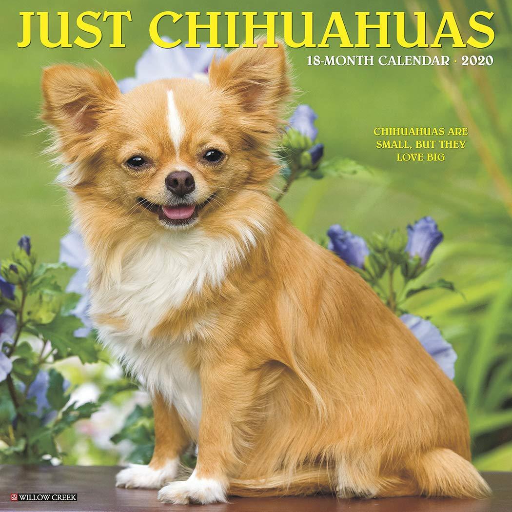 Akc Dog Show 2020.Just Chihuahuas 2020 Wall Calendar Dog Breed Calendar