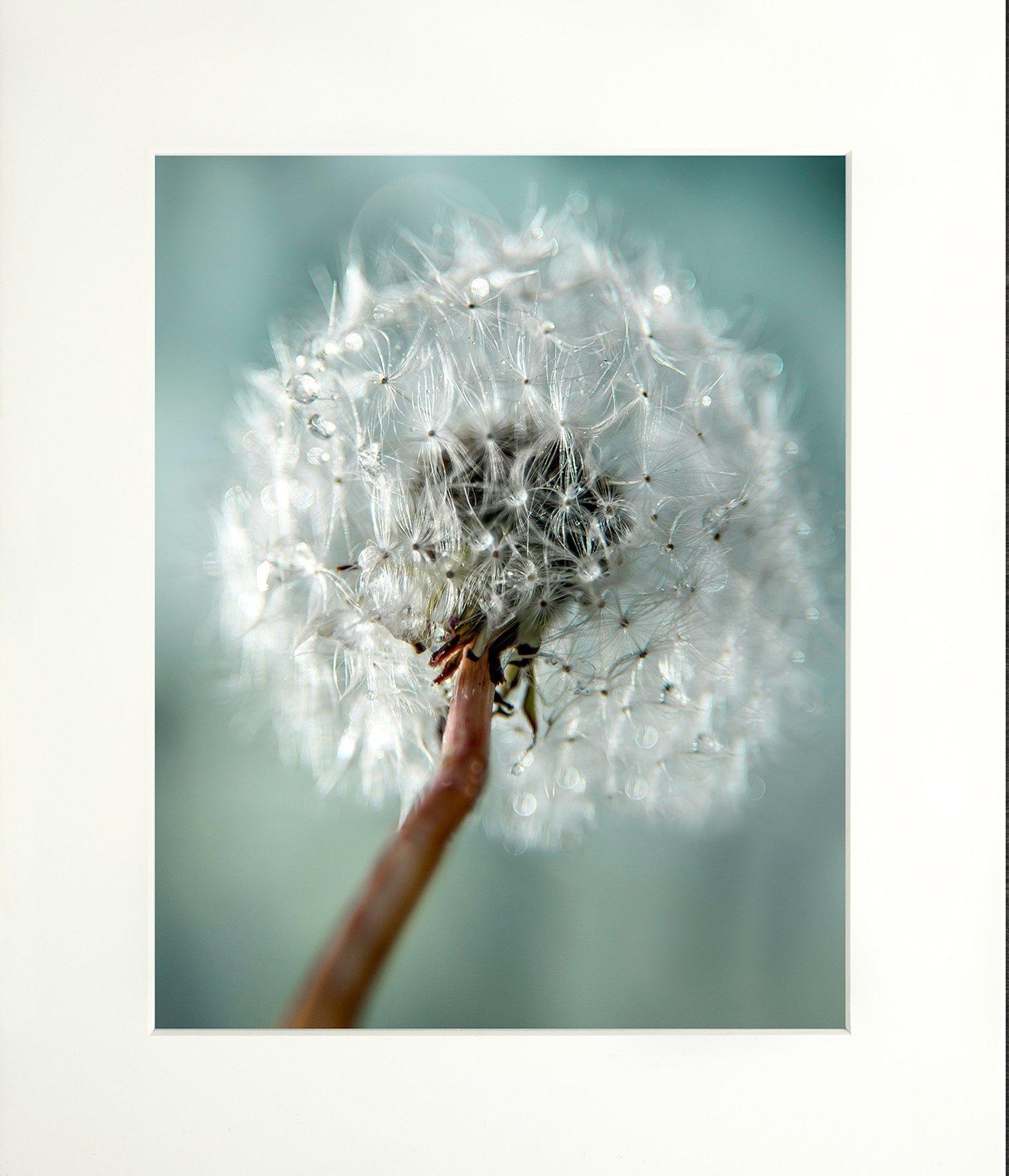 Dandelion, Cottage Decor, Rustic Wall Art, Canvas, Farm Art, Teal Fixer Upper, Floral Shabby, Bathroom, 8x10 print