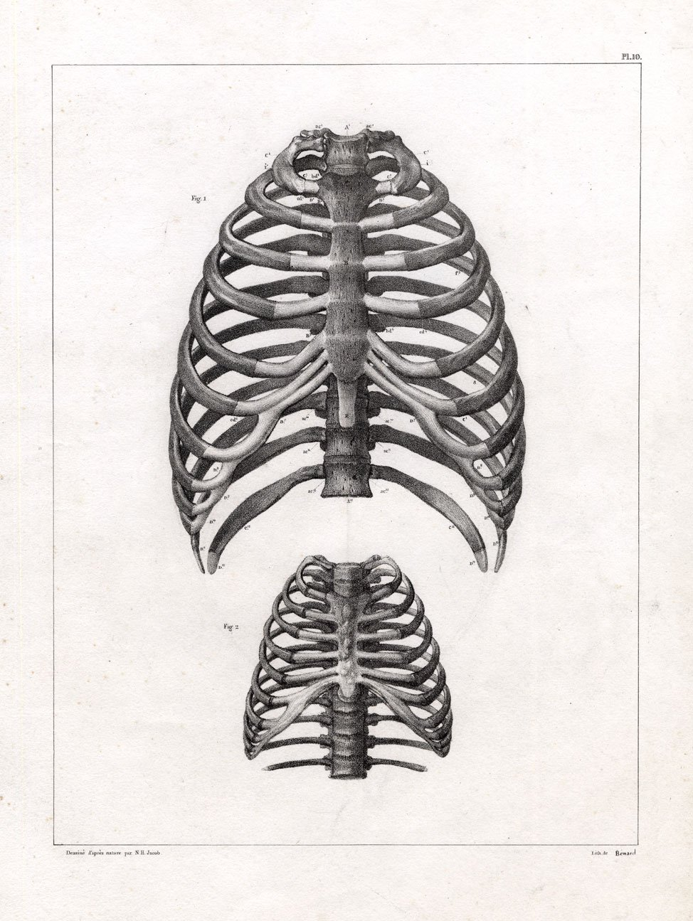 Theprintscollector 4 Antique Medical Anatomy Prints Thorax Sternum