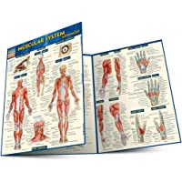 Quick Study Academic Muscular System Advanced