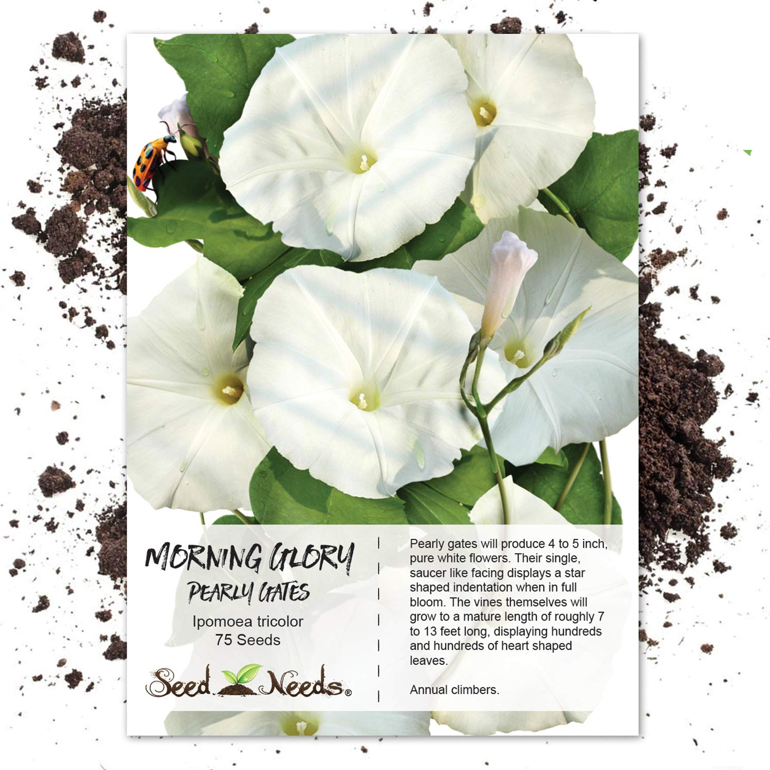 Seed Needs, Pearly Gates Morning Glory
