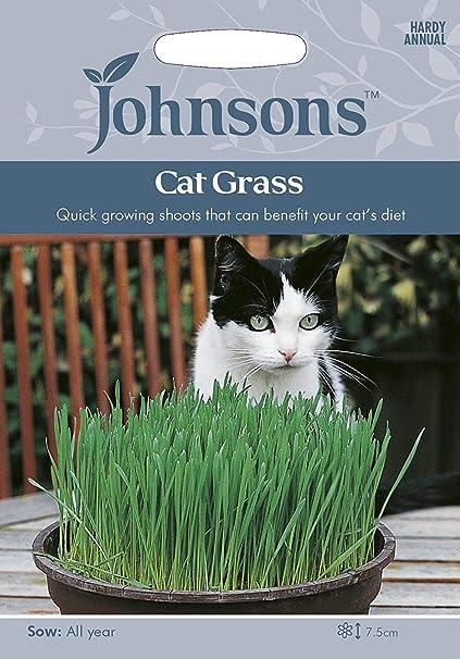 Portal Cool Johnsons Hierba del gato Avena Sativa 25G Sow 2020
