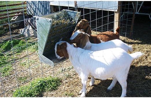 1 QUART 2 SPACE WALL MINERAL FEEDER CHICKEN POULTRY GOAT SHEEP LAMB LLAMA ALPACA
