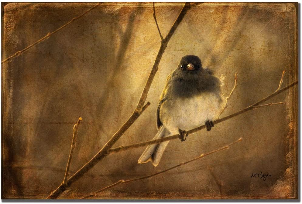 Backlit Birdie Being Buffeted by Lois Bryan, 22x32-Inch Canvas Wall Art