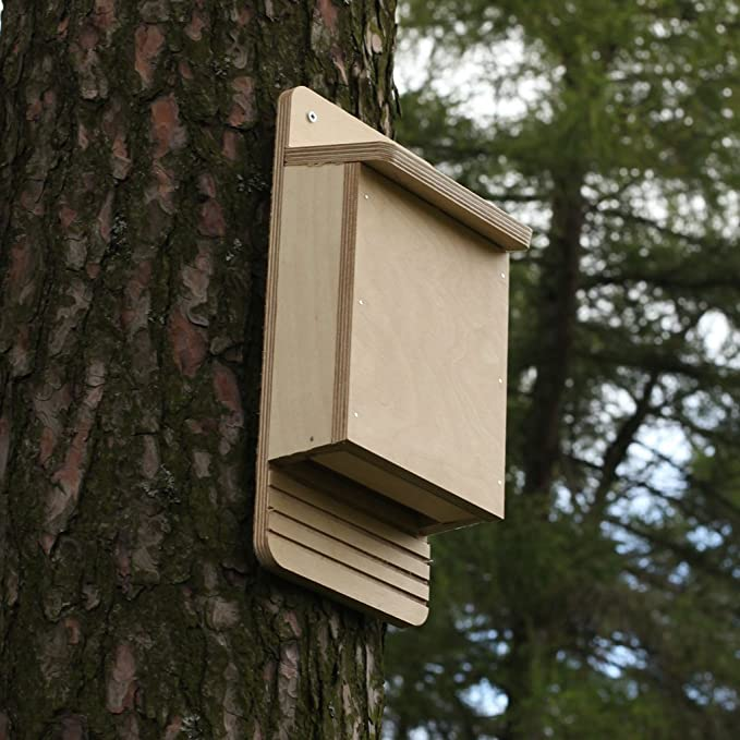 Caja de madera para murciélagos, kit de montaje: Amazon.es: Jardín