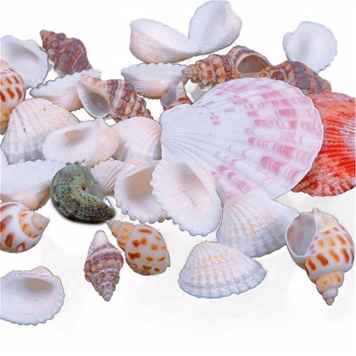 LKXHarleya 100g Sea Shells Mixed Beach Seashells for Crafts Various Assorted Sizes Seashells Bulk for Jewelry Making,Window Curtains,Party Wedding Decor and Vase Fillers