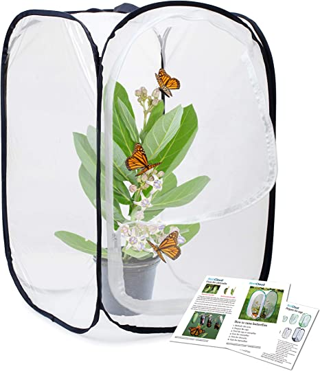 Insect and Butterfly Habitat Cage Terrarium Pop-up with Clear PVC on Top 12 x 14 Tall