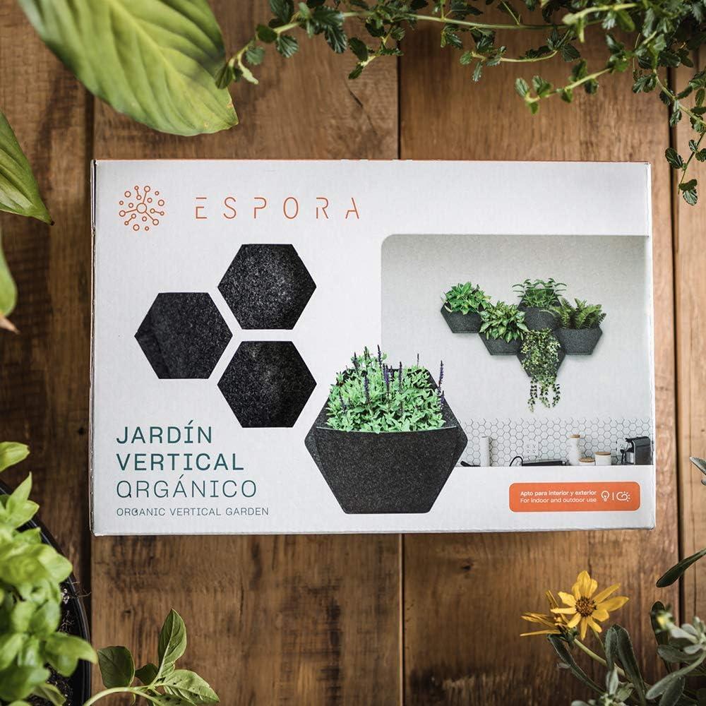 Jardín Vertical MH. Maceta Hexagonal de 350x 200x 285 mm con autorriego. Crea un Mosaico vegetal en espacios interiores y exteriores.: Amazon.es: Jardín