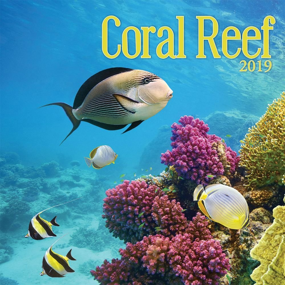 Turner Photo Coral Reef 2019 Wall Calendar (199989400160 Office Wall Calendar (19998940016)