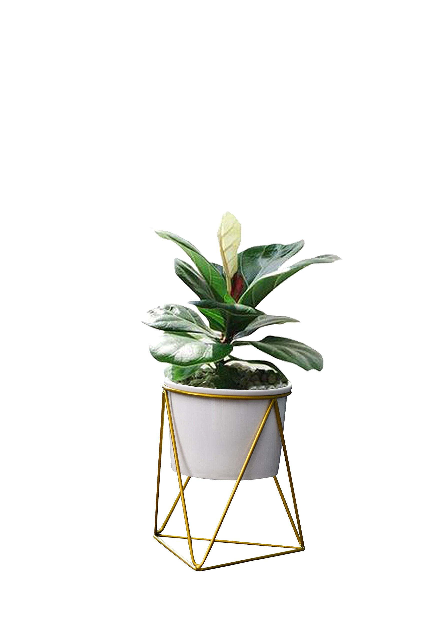 Lainey indoor planter pot modern planter 6'' pot mid century moden planter metal base planter/plan pot indoor/office plants/plant stand (White gold)