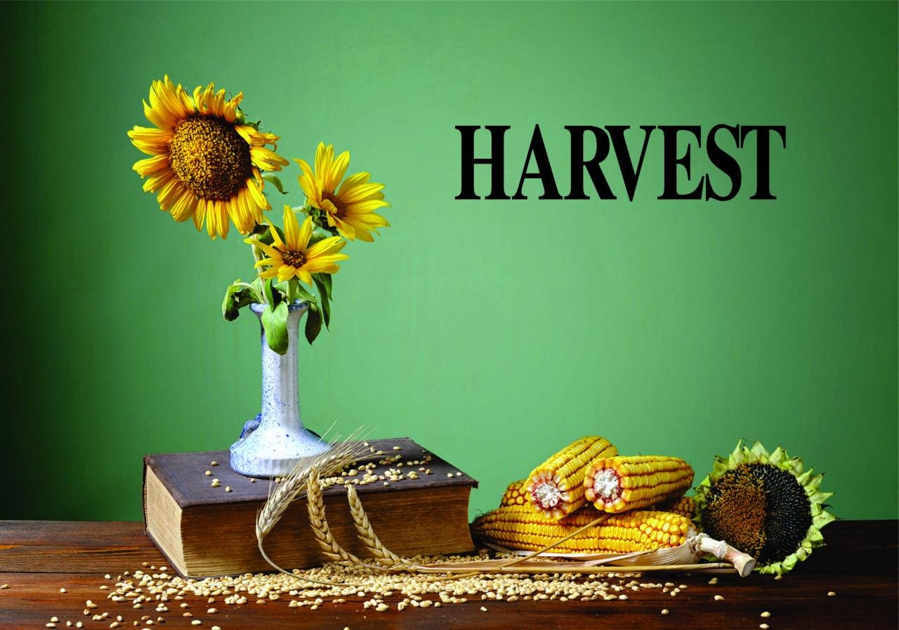 Harvest Seasonal Text Lettering Quote Color Design with Vinyl Moti 2465 1 Decal Peel /& Stick Wall Sticker As Seen Size 8 Inches x 20 Inches