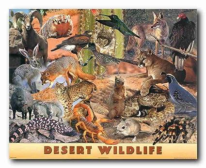 Wildlife Animals Wall Decor Desert Collage Kids Room Art Print Poster 16x20