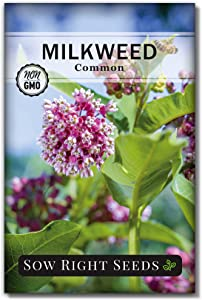 Sow Right Seeds Common Milkweed Seeds; Attract Monarch Butterflies to Your Garden; Non-GMO Heirloom Seeds; Full Instructions for Planting, Wonderful Gardening Gift (1)