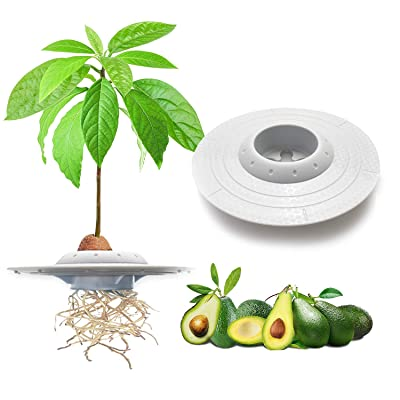GORNORVA Avocado Tree Growing Bowl, Avocado Planting Seed Germinator Bowl Garden Seed Starter Gift for Women Grow Avocado Plant Indoor Kitchen Garden Seed Starter Gift (Seeds & Plants NOT Included): Garden & Outdoor