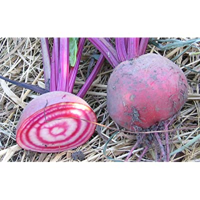 Candy Cane Beet Heirloom 50 SeedsSweeter Than Purple Beets: Home Improvement