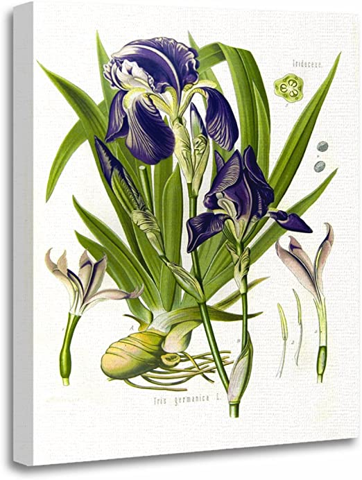 Flowers Of Flax Art Print Home Decor Wall Art Poster