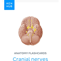 Anatomy flashcards: Cranial nerves: Learn all nerves on the go (Kenhub Flashcards Book 71) (English Edition)