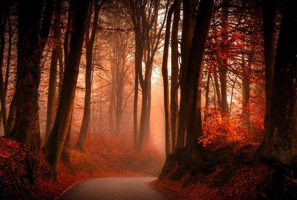 Autumn Red Woods Art Print Canvas Poster,Home Wall Decor(28x42 inch)