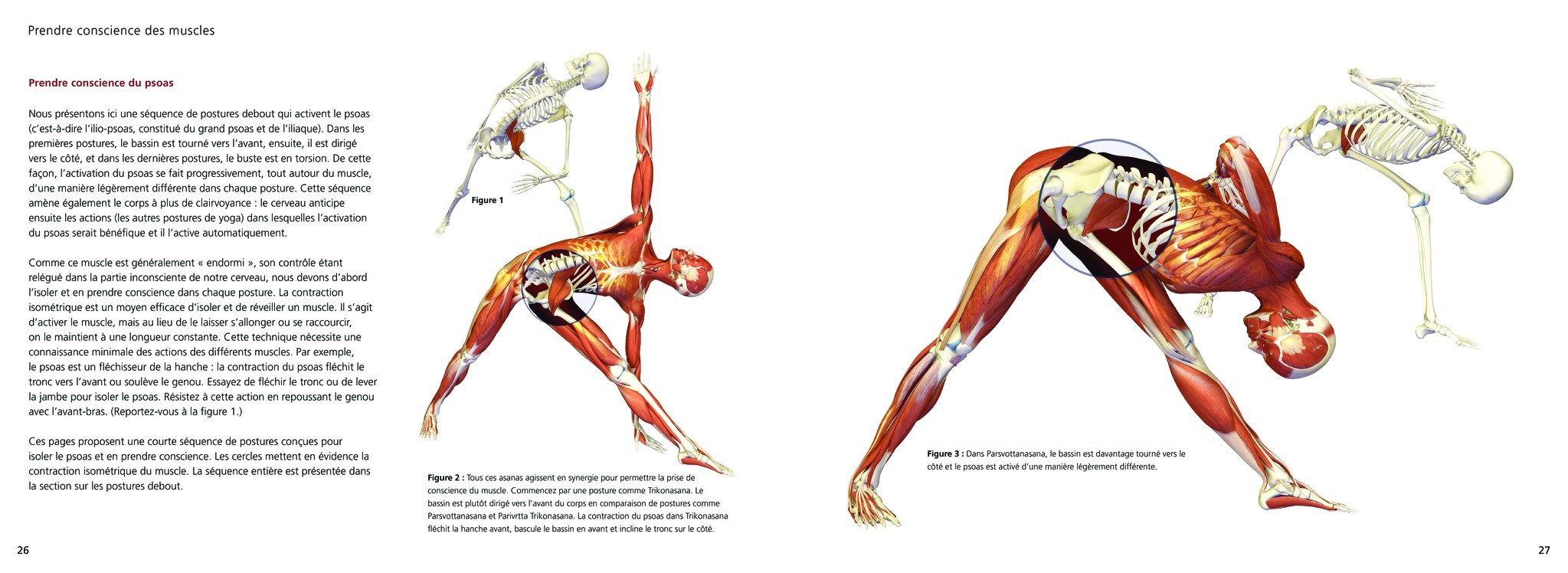 Yoga anatomie : Les postures (LP.BIEN-ETRE): Amazon.es ...