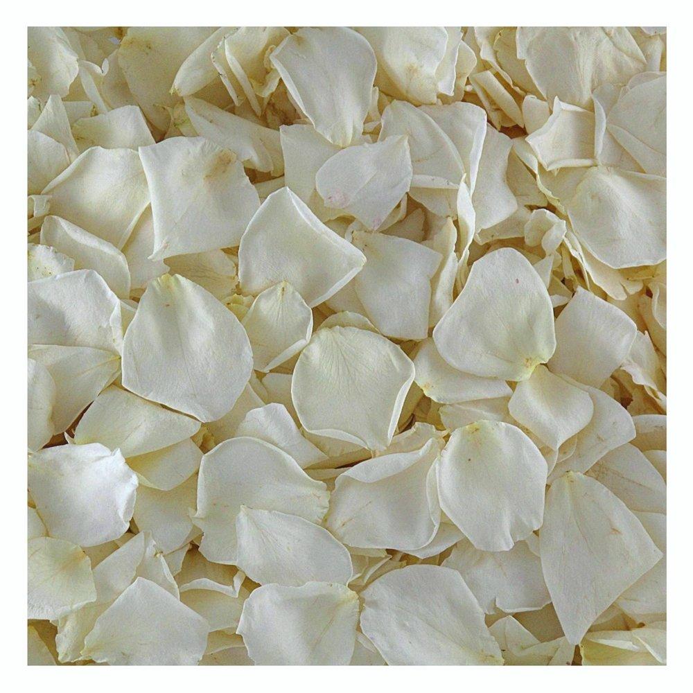 Cream Rose Petals. 120 cups Wedding Petals from Flyboy Naturals. Wedding Decoration. by Flyboy Naturals