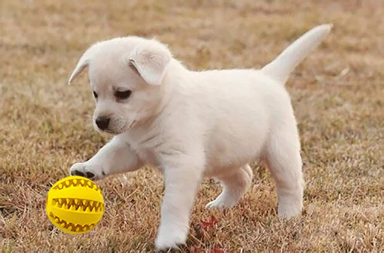 Amazon.com: Pelota de juguete para mascotas para perros ...