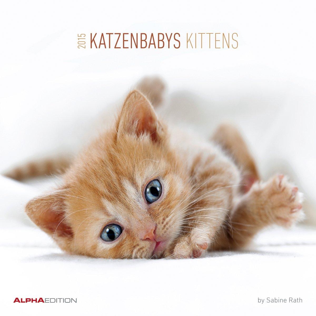 katzenbabys-2015-kittens-broschrenkalender-30-x-60-geffnet-tierkalender-by-sabine-rath