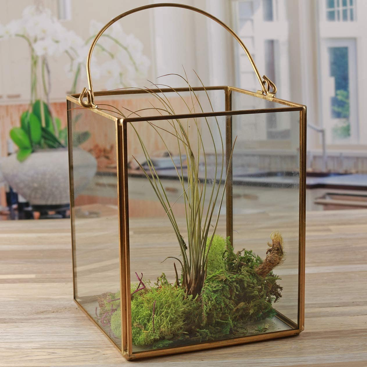 """Circleware Terraria Clear Glass Terrarium with Handle Home Plant Decor Metal Frame Design Display Flower Balcony Box and Best Selling Garden Gifts, 5.12"""" x 6.50"""", Square Gold 5.12x 6.5"""