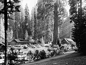 Sequoia National Park Nview Of The Giant Forest Village With The Sentinel Tree In Sequoia National Park California Photograph C1957 Poster Print by (24 x 36)