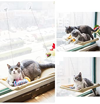 Amazon.com : iPetoo Cat Window Perch, Cat Bed Window Hammock Pet Resting Sunny Seat for Pet Cat with Durable Suction Cups and Fixing Screw, ...