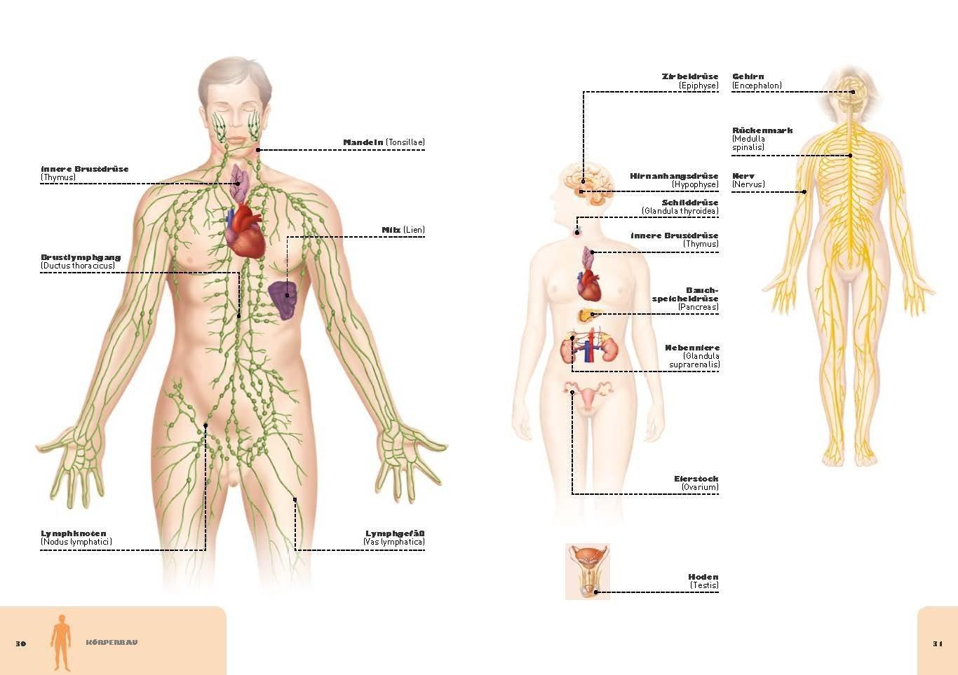 Fantastisch Anatomie Von Frauen Körper Fotos - Menschliche Anatomie ...