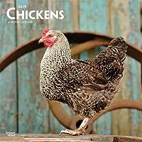 Chickens 2019 Calendar