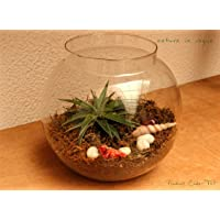 "Nature In Vogue 8"" Glass Fish Pot Transparent Terrarium Planter"