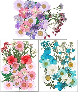 Ioffersuper 104Pcs Dried Pressed Flowers Leaves Real Natural Plants Herbarium for Resin Craft Nail Art Candle Jewelry Gift Making Home DIY Painting Photo Album Decor Face Make-up Supplies