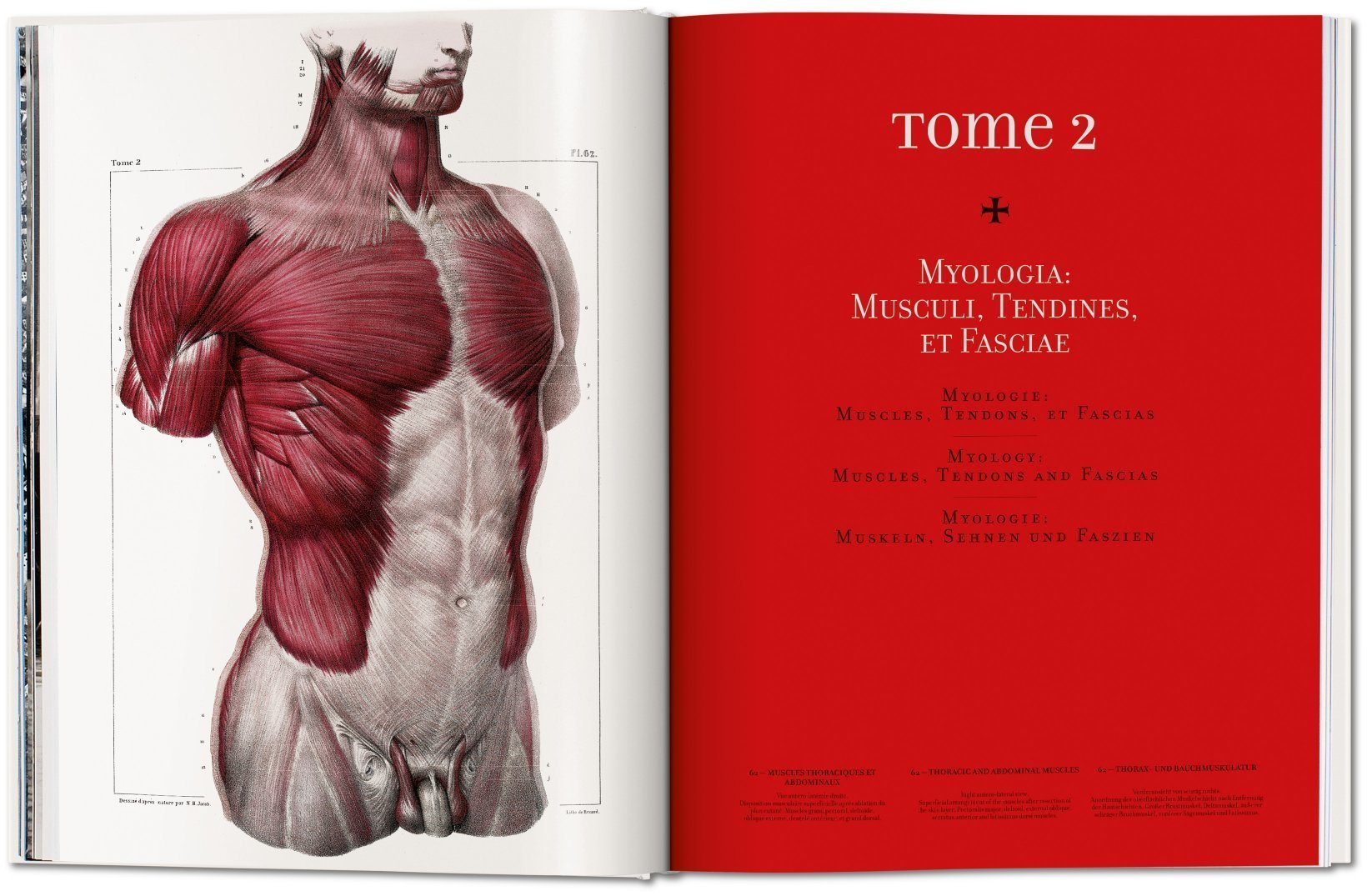 Bourgery. Atlas of Human Anatomy and Surgery (Fp): Amazon.de: Jean ...