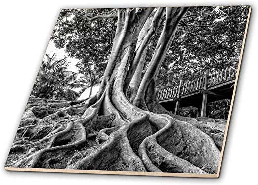 4-Inch 3dRose ct/_165593/_1 Black and White Photograph of Lovely Peach Trees and Their Blossoms Ceramic Tile
