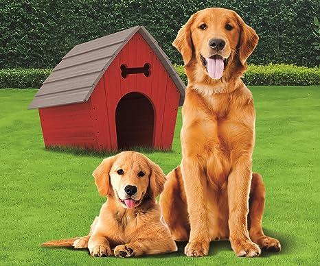 Amazon.com: dorado Retriever con perro cámara de Vellón ...