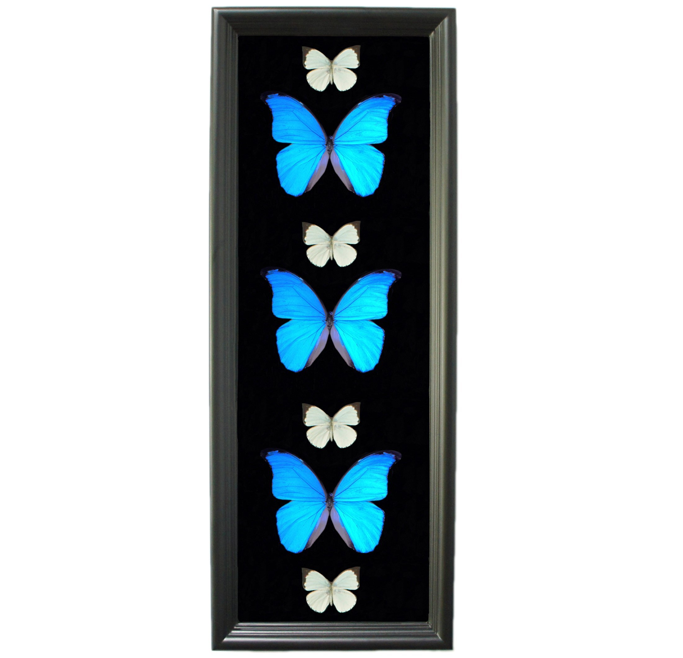 Blue Butterfly Taxidermy Shadow Box - Entryway decor for wall, Butterfly Gifts For Her