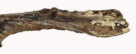 Holz 4 x 4 x 0,1 cm Birkenblume 4cm 100 St/ück Natur