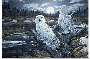 GREATBIGCANVAS Snowy Owls Fine Art Poster Print, Owl Home Decor Artwork, 36