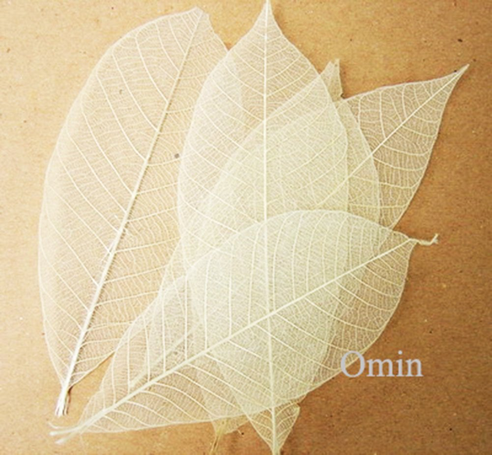 Pack of 200 Omin Brand Natural Rubber Tree Skeleton Leaves Decorative DIY Craft Leaf Kits size 3.5 - 4 Inch Height Approx