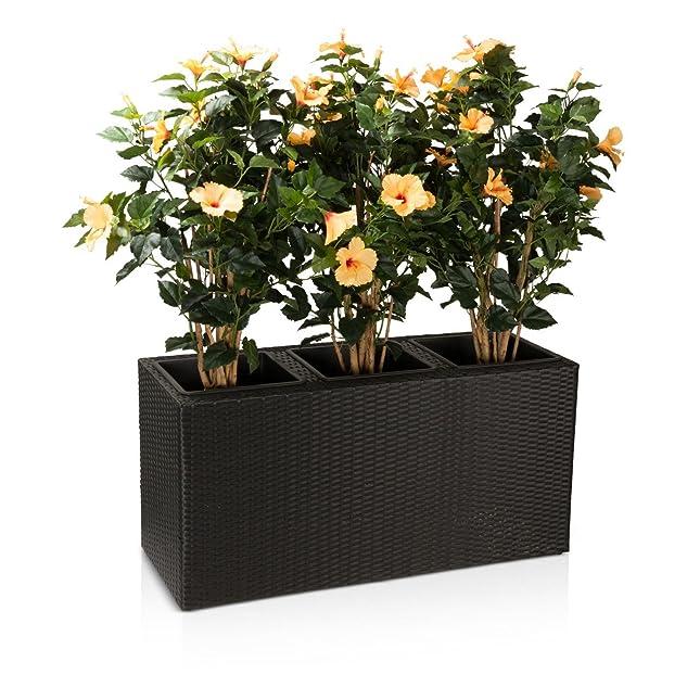 Pflanztrog Blumentrog VISIO 50 Polyrattan Pflanzkübel - Maße ...