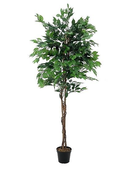Set 2 X Di Ficus Benjamin Artificiale Con 1550 Foglie, Verde, 180 Cm