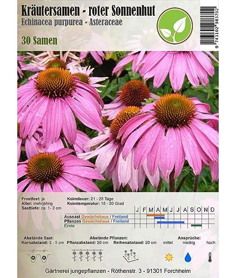 Semillas de hierbas - Red Equinácea / de Echinacea purpurea ...