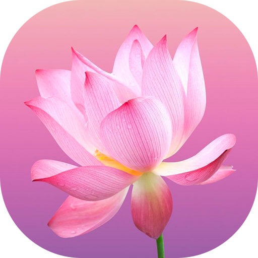 (Flower Wallpapers)