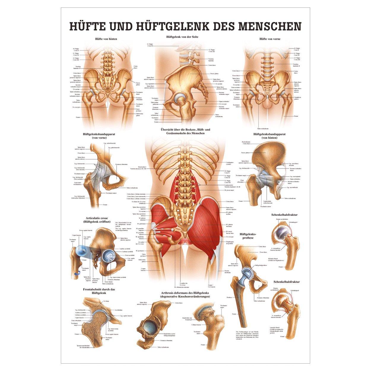 Groß Bursa Hüftanatomie Ideen - Menschliche Anatomie Bilder ...