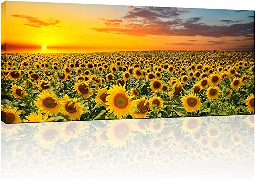 Sunflower Field Yellow CANVAS WALL ART DECO LARGE READY TO HANG all sizes