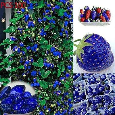 YENJO 100 pcs/Bag Blue Climbing Strawberry Seeds Perennial Bonsai Plant Seeds : Garden & Outdoor