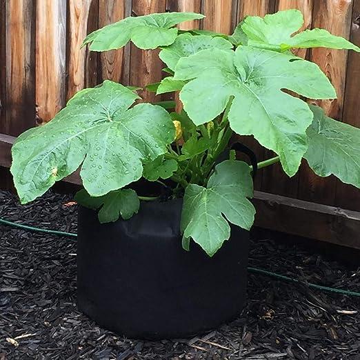 PEYOU Bolsa de Cultivo de Plantas 20L/5 Galones(5 Piezas), Saco ...