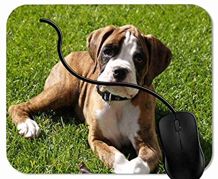 106a6829df82 Amazon.com : Mouse Pad Funny Boxer Dog Mouse Mat for Computer ...